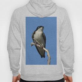 Male Tree Swallow Hoody
