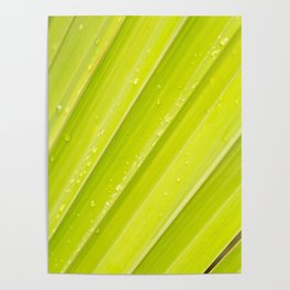 Dew Drops of Leaves Poster