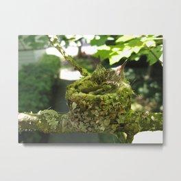 Baby hummers Metal Print