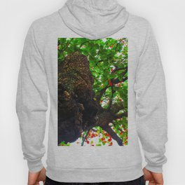 big tree with green leaves and red leaves Hoody