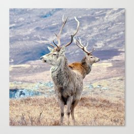 Stags Canvas Print