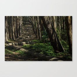Wandering woods Canvas Print