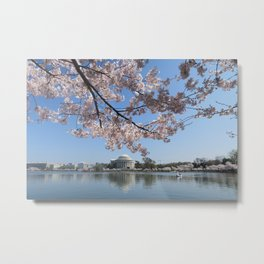 cherry blossoms jefferson memorial Metal Print