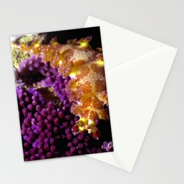 Unidentified Stationery Cards