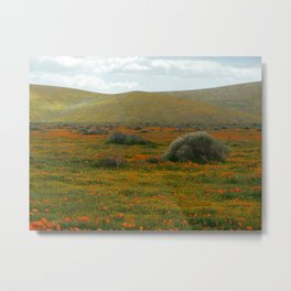 Poppy Field Backside Metal Print