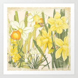 Vintage Floral Paper:  Spring Flowers on Shabby White -Daffodils Art Print