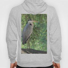 Grey heron (Ardea Cinerea) amongst trees Hoody