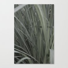 Lemon Grass Canvas Print