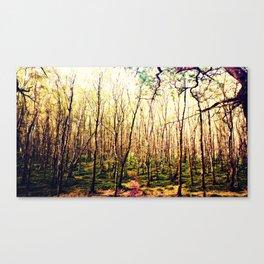 Irish Trees Canvas Print