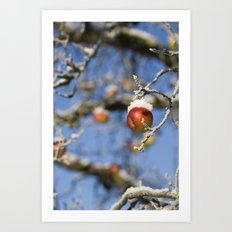 Snow Apple Art Print