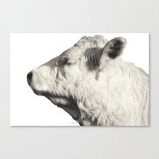 Bovine Profile Canvas Print