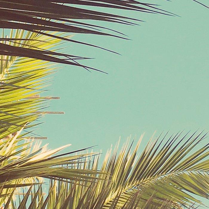 Autumn Palms Leggings