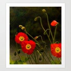 Yang Poppies Art Print