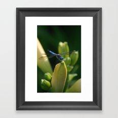 Dragon Fly 1 Framed Art Print
