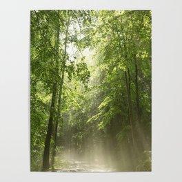 Spring Forest Mist Poster