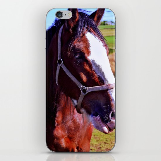 Scottish Clydesdale iPhone & iPod Skin