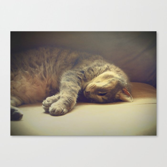 Catnapping Canvas Print