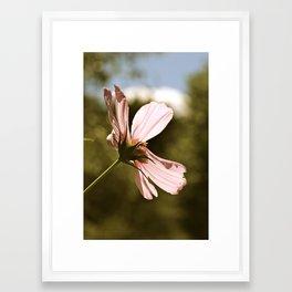 Pink In The Garden  Framed Art Print