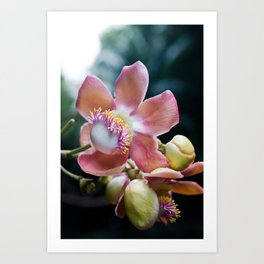 Flower of a Tree Art Print