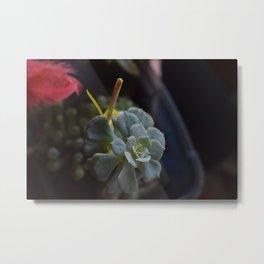 Succulent in Summer Metal Print
