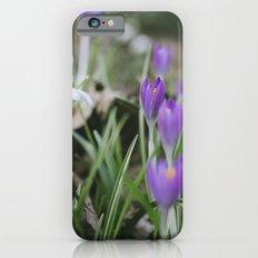 Spring Crocus flowers growing among Snowdrops. Norfolk, UK. Slim Case iPhone 6s