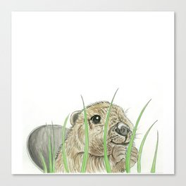 Peekaboo Beaver Canvas Print