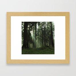 Forrest one Framed Art Print