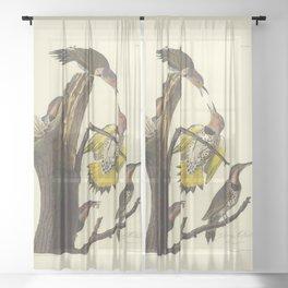 Golden-winged Woodpecker by AUDUBON Sheer Curtain