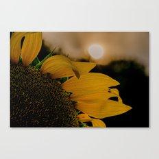 Sunflowers 17 Canvas Print