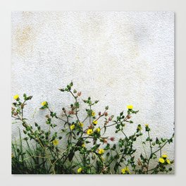 Minimal flora - yellow daisies wild flowers Canvas Print