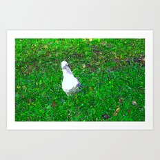 The Curious Incident of the Seagull in the Park Art Print