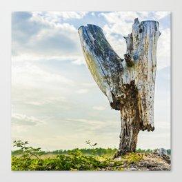 Stumpy Canvas Print