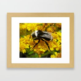 Buble Bee hard at work! Framed Art Print