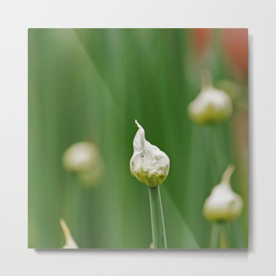 Onion Flower Bud Metal Print