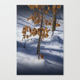 Orange Autumn Leaves still on the branch in the Winter Snow in the Upper Peninsula of Michigan No.05 Canvas Print