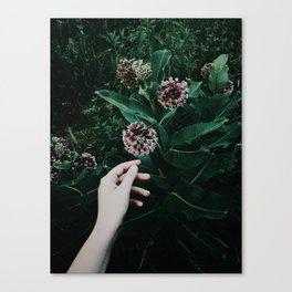 Seeking Magic Canvas Print