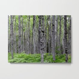 The Cabin . Aspen Forest Metal Print