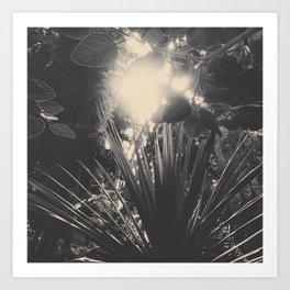 Solar plants Art Print