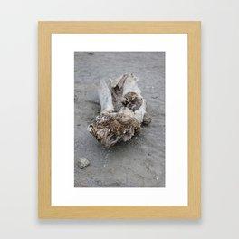 Moeraki Branches (2) Framed Art Print