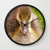 ryan gosling Wall Clocks featuring Gosling by GardenGnomePhotography