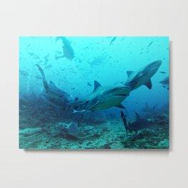 Bull Sharks Metal Print