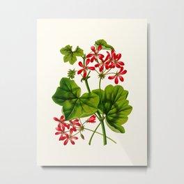 Joy Leaved Geranium Vintage Scientific Botanical Flower Illustration Hand Drawn Art Metal Print