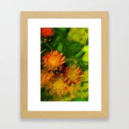 Orange Hawkweed Blossoms Abstract Impressionism Framed Art Print