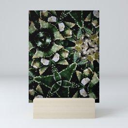 Succulents on Show No 1 Mini Art Print