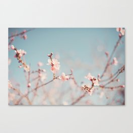Just blooming. Canvas Print