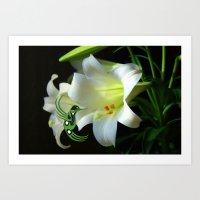 Lily Hummingbird Art Print