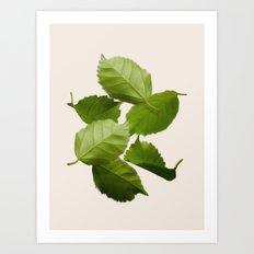 Green Leaves Falling Art Print