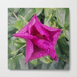 Glistening Flower Metal Print