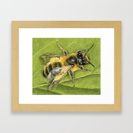Honeybee On Leaf Framed Art Print