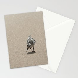 Sandpiper bird on wet sand Stationery Cards
